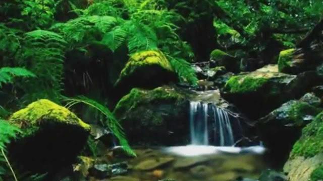 آيات و أحاديث حول الماء