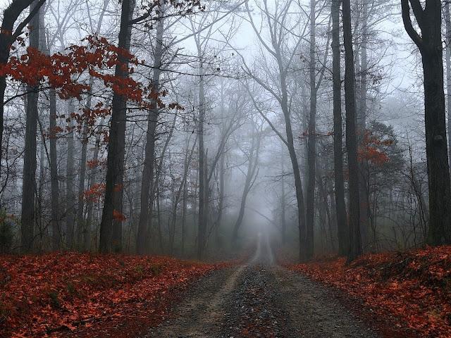 Nebbia nel Bosco