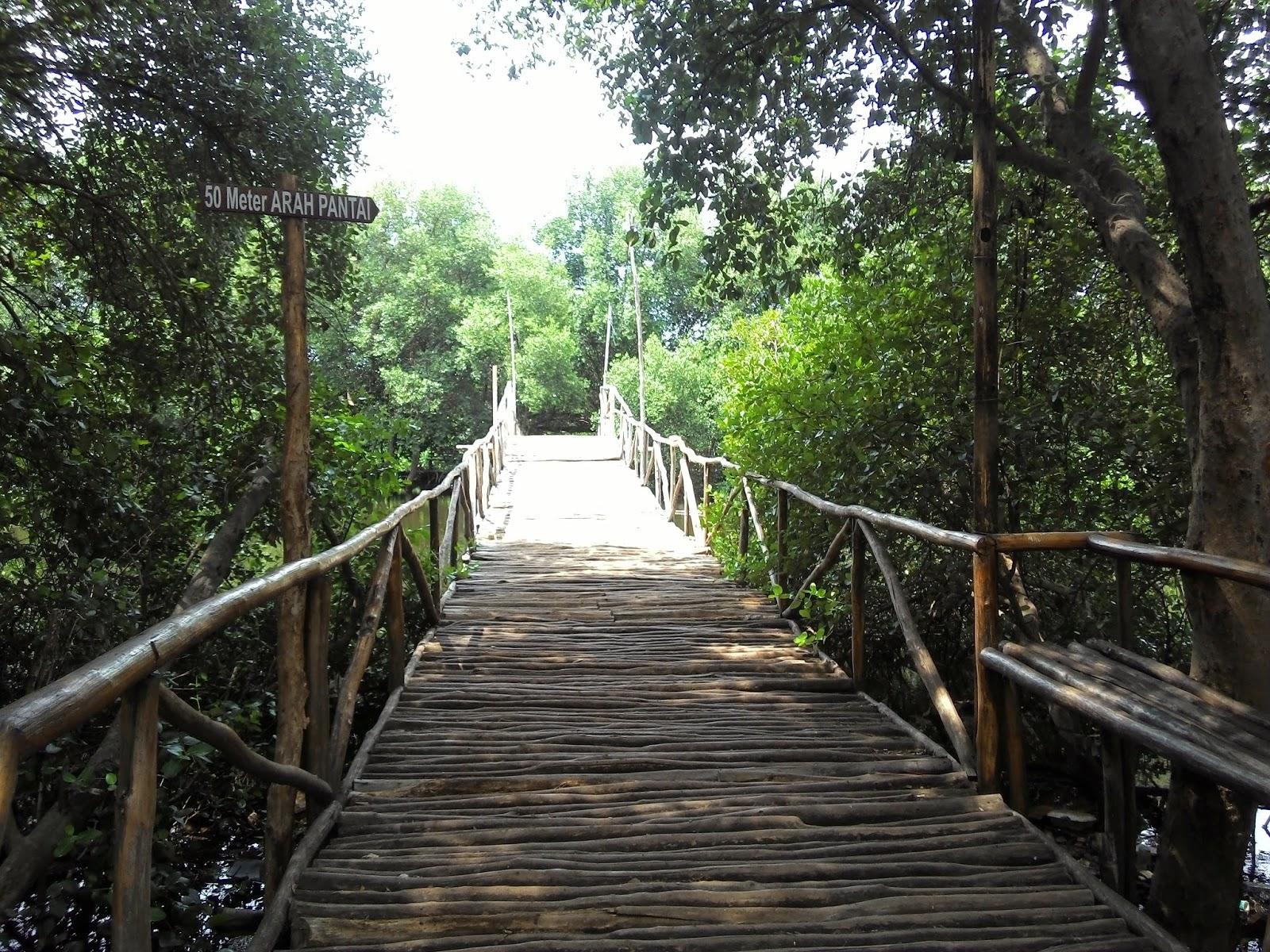 lokasi hutan mangrove ini cukup terawat semoga dengan naiknya tiket masuk seharga sekarang perawatan taman wisata dapat