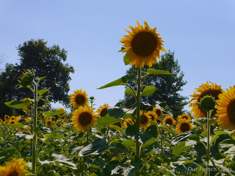 Summers in France - My French Oasis blog