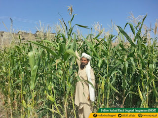 Maize Growers Gained Increase Income