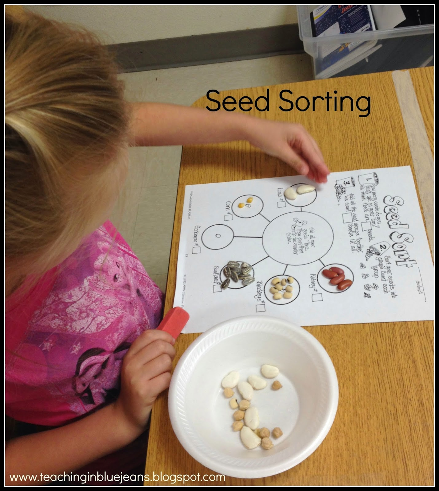More Hands On Seed Fun