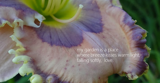 Welcome to 2018 and DAYLILY HAIKU THURSDAY!