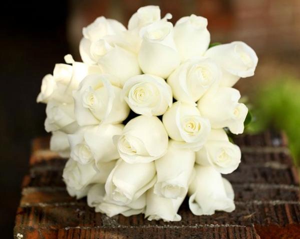 hình ảnh đẹp hoa hồng trắng 2