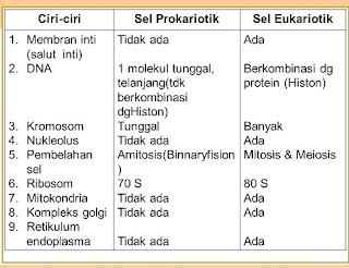 tabel perbedaan sel prokariotik dan eukariotik,perbedaan sel hewan dan sel tumbuhan,perbedaan sel prokariotik dan eukariotik pdf,jelaskan perbedaan sel prokariotik dan eukariotik,