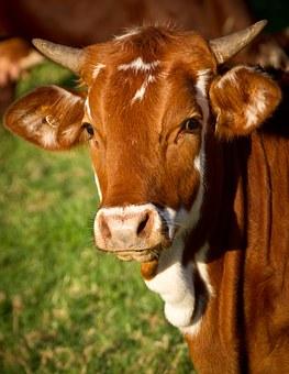 530 Koleksi Gambar Binatang Haram Dan Halal HD Terbaik