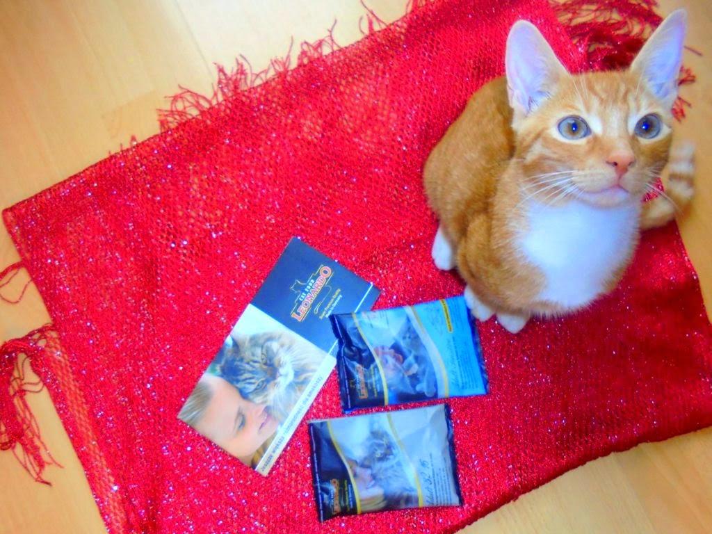 karma dla kotów leonardo recenzja