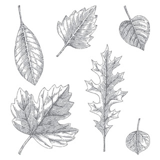 The picture shows the images in the Vintage Leaves stamp set by Stampin' Up!, there are 6 leaf images of varying types and size.
