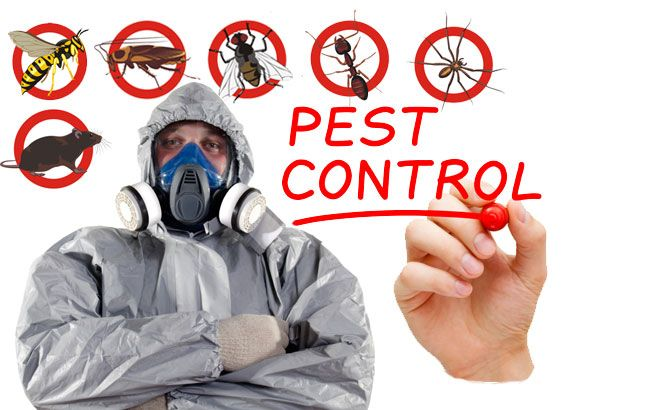 Company-kill-insects-at-home-3