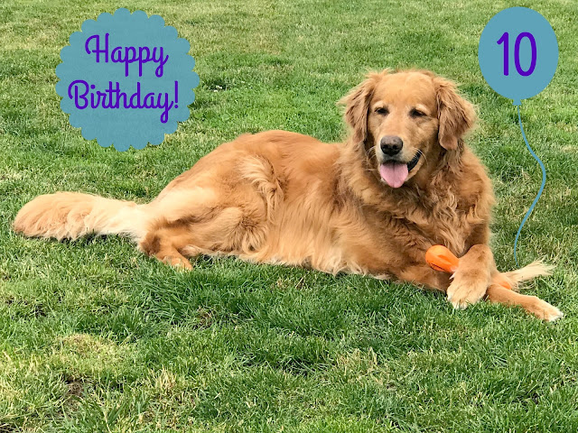 golden, retriever, dog, birthday
