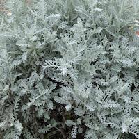 深北緑地で見かけた植物