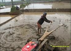 Istilah - istilah dalam pertanian yang ada di kota Subang, Jawa Barat (Bagian 3)