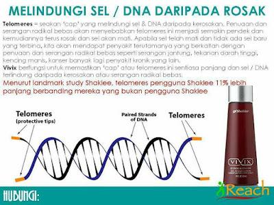 Telomere Dan Kaitannya Dengan Kesihatan Manusia