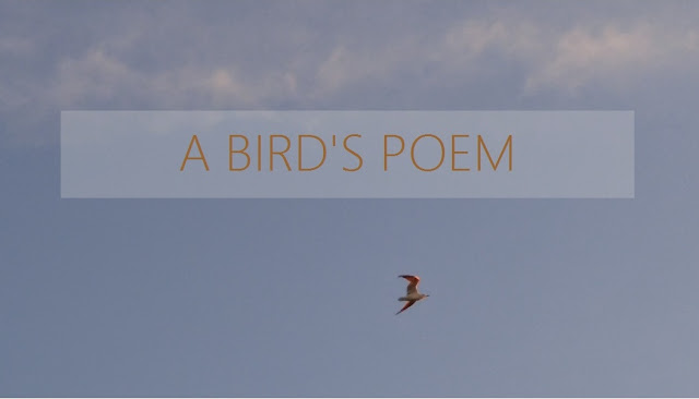 A bird's poem about freedom democracy