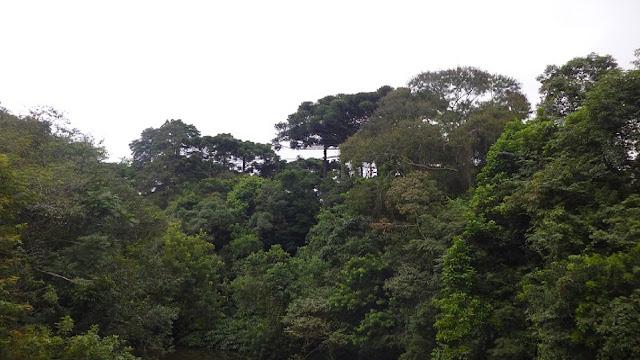Floresta - Exemplos de Restauração Ecológica na América Latina