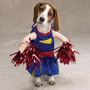 Animals Talk Funny Dogs Dressed Up