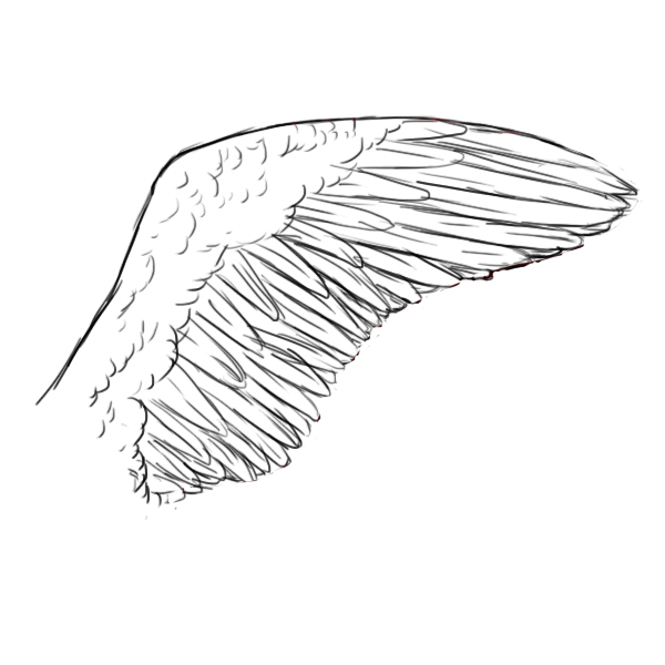 How To Draw Wings - Draw Central