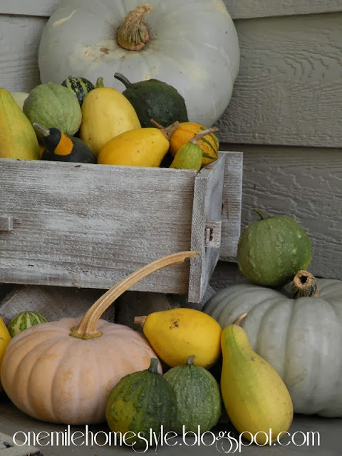 Ghost pumpkins and gourds - fall decorating