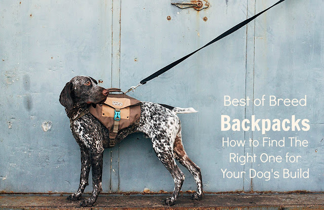 Dog backpacks for hiking and city walking