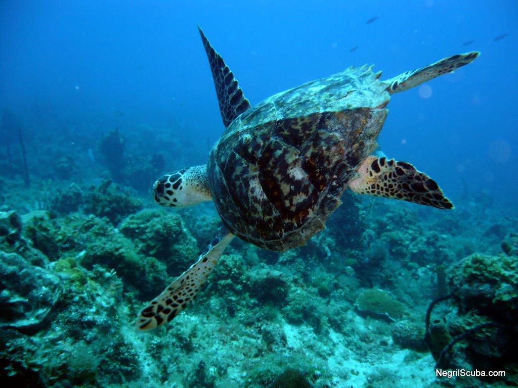 Animals Sea Animals