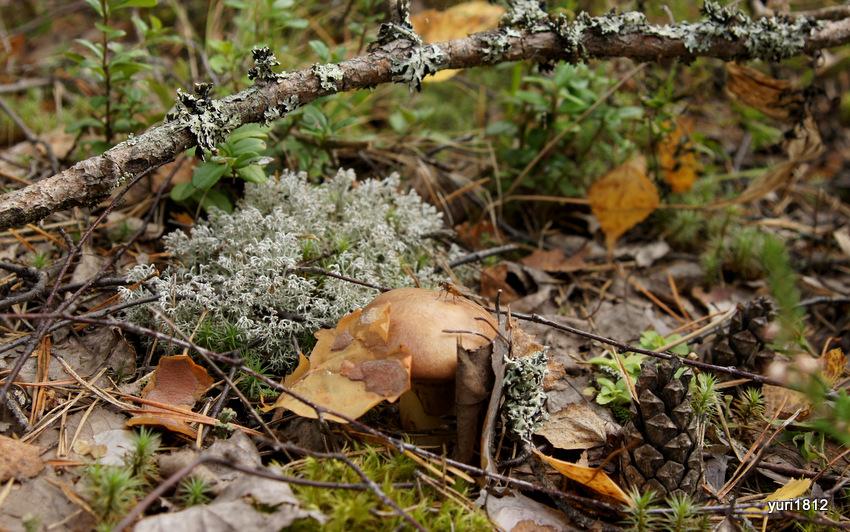 Гриб лес