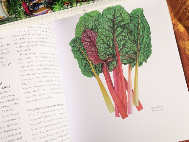 Perpetual Spinach and Swiss Chard in 'The Salad Garden' by Joy Larkcom'.