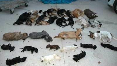 Campaña de firmas que pide justicia por la muerte de 2.865 animales