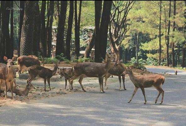 Harga Tiket Masuk Taman Safari Prigen Pasuruan Atraksi Dan Wahana