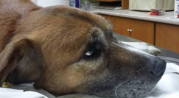 Δηλητηριασμένες γάτες απο φόλες και καμμένα σκυλιά στο Δήμο Κασσάνδρας
