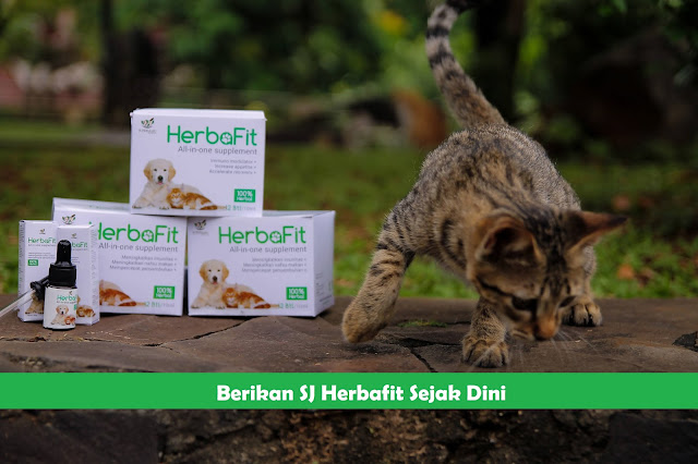 sj herbafit menambah nafsu makan kucing