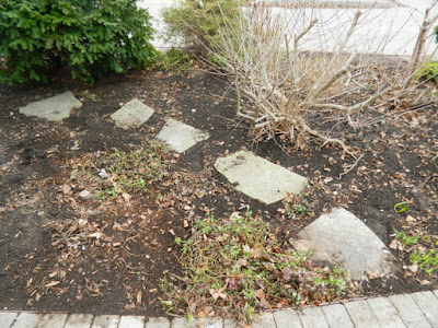 Leslieville Front Yard Spring Cleanup After by Paul Jung Gardening Services--a Toronto Organic Gardening Company