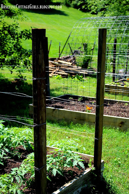 #RaisedBed #RaisedBedGarden #Garden #Gardening #HobbyFarm #Farm #DreamGarden #CattlePanels