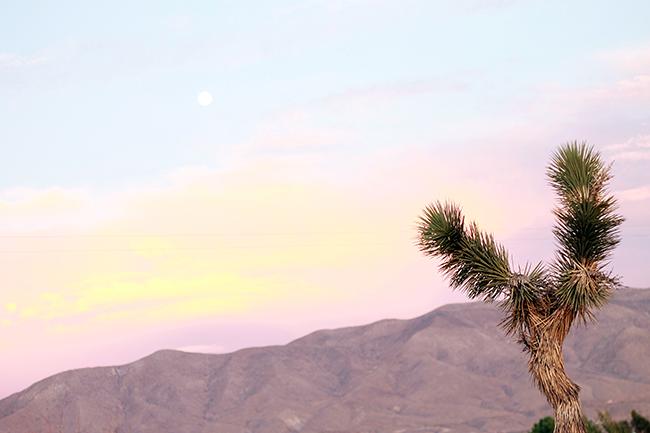Summer Desert Sunset