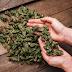 Herbal Sebagai Obat-Obatan