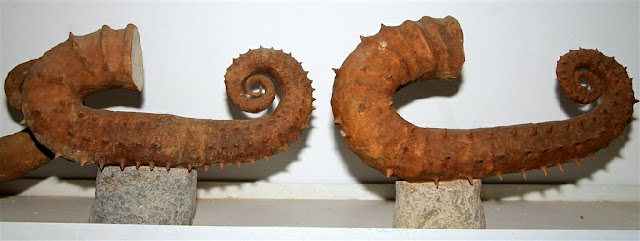 AMMONITES For Sale at an attractive price