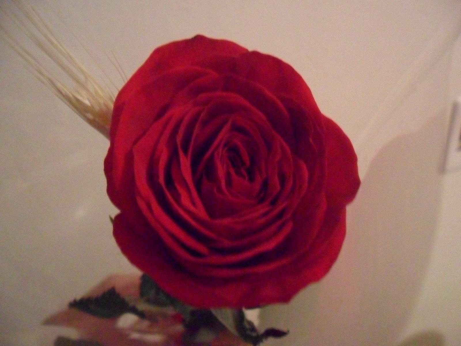 718de41e2 Mais do que namorados!: Significado das rosas e suas quantidades