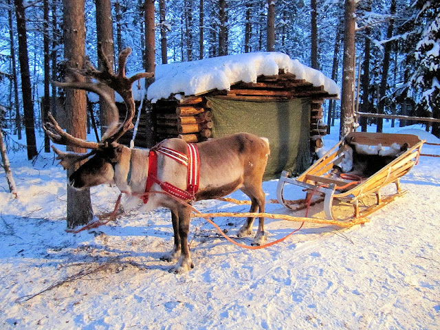 Your reindeer-driven sleigh awaits for your nighttime sleigh ride to see the Northern Lights. Photo: RukaKuusamo.com.