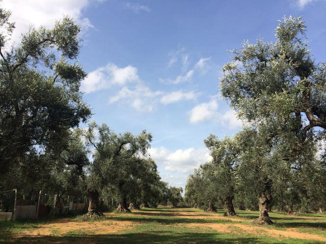 Olive oil making in Puglia Italy