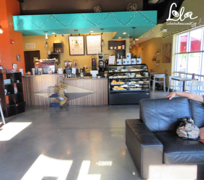 Orlando Cat Cafe|Cat Cafes