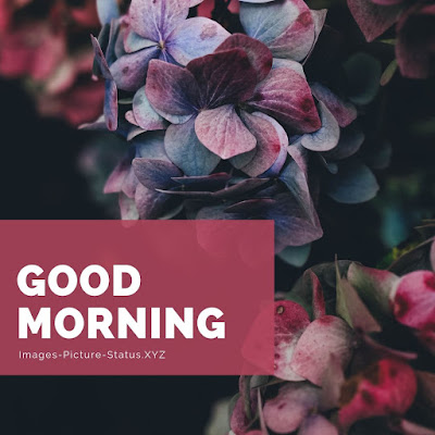 Good Morning Images With Flowers good morning images with flowers hd good morning images with rose flowers good morning with flowers images good morning images with flowers free download good morning hd images with flowers, Latest hindi new love Good Morning Images free Download For whatsapp mobile facebook , Good Morning Pics Wallpaper With Flower , Nature HD Gud Morning , Beautiful HD Hindi Quotes Shayari GD mrng Pics for best Friends