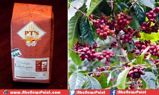 kopi los planes salah satu kopi termahal di dunia