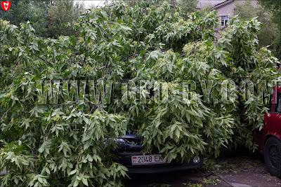 Минск. Ураган 13 июля повалил дерево на автомобиль