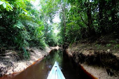 Ekosistem Rawa Gambut dan Air Tawar