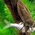 آبی کیڑا جو کچھووں، بطخوں اور مچھلیوں کو نوالہ بناتا ہے