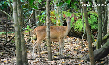 aneka ragam flora dan fauna di pulau peucang ujung kulon