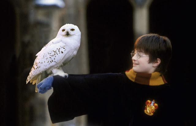 Хедуиг и  Хари - Хари Потър и философският камък