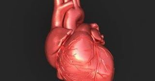 25 Amazing Facts About the Human Heart