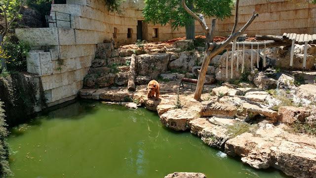 """דוב בגן החיות התנכ""""י"""