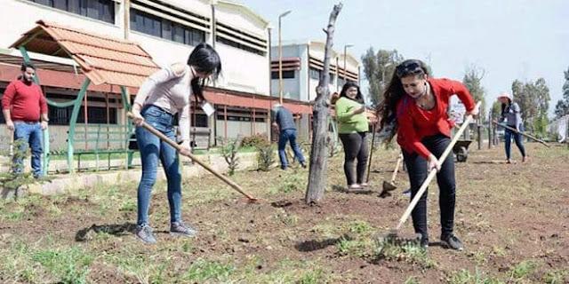 شباب يكرسون جهودهم لتوسيع المساحات الخضراء وخدمة العمل البيئي في السويداء