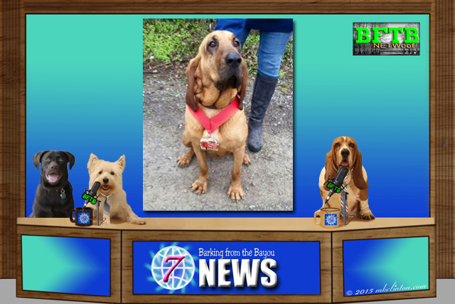BFTB NETWoof News set with Bloodhound wearing a medal